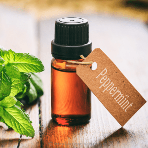 peppermint oil for stomach bug