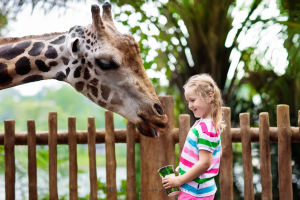 zoo for summer trip
